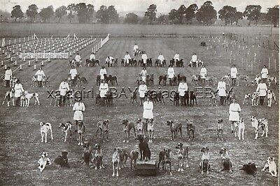 DOG Great Dane Send Kennel, 100 Dogs in Obedience Stay Command, Print from 1930s