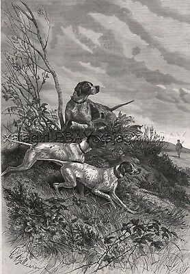Dog Pointers Hunting in the Field (Named Kennel ID's) Large 1880s Antique Print
