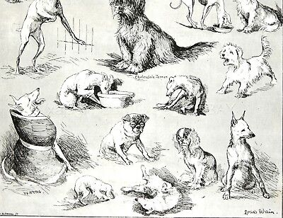 Dog Poodle Corded Scares Terriers, St. Bernard by Louis Wain 1890s Antique Print