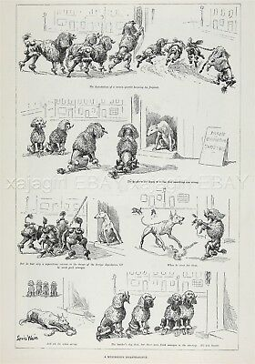Dog Poodles Steal Sausages from Butcher by Artist Louis Wain 1890s Antique Print