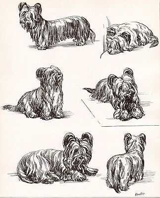 DOG Skye Terrier Dogs Sketched Views, Beautiful Art Print 1930s
