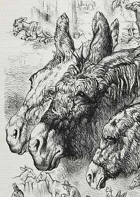 Donkey Family at Rest & Work, Beautiful Large 1870s Antique Engraving Print