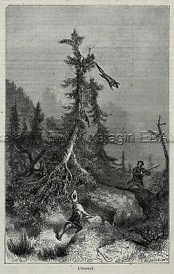 Flying Squirrel Hunting with Dogs, 1860s Engraving Antique Print & Article