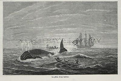 Marine Whaling Whale Hunt, Dramatic 1870s Antique Print & Article