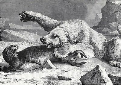 Polar Bear Vs. Seal on Alaska Coast Large 1870s Antique Engraving Print