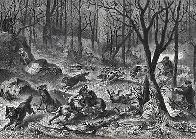 Wolf Hunt Vosges Mountains France, Large 1870s Antique Engraving Print & Article