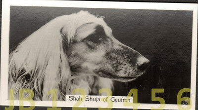 DOG Afghan Hound (Named Champion), Small Photo Trading Card 1938