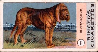 DOG Bloodhound, Very Rare Trading Card, 1908