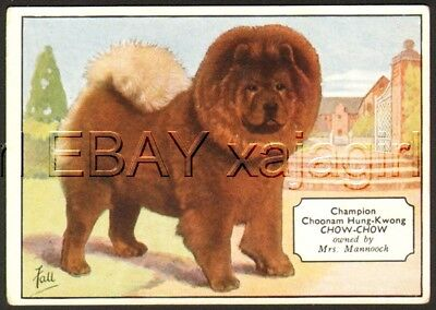 DOG Chow Chow (Named), Antique 1930s Trading Card