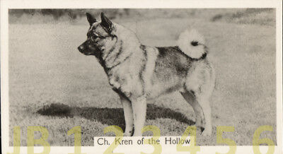 DOG Norwegian Elkhound (Named Champion), Small Photo Trading Card 1938