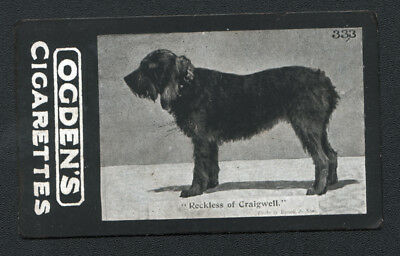 DOG Otterhound Otter (Named) 1902 Photo Trading Card