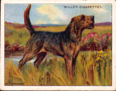 DOG Otterhound, Antique 1914 Trading Card