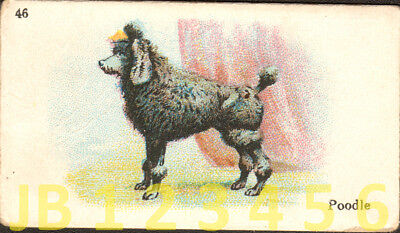 DOG Poodle (Named), Small British Trading Card Tobacco Card 1912