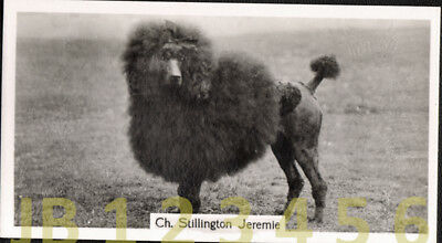 DOG Poodle Black Standard (Named Champion), Small Photo Trading Card 1938