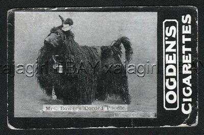 DOG Poodle Corded Poodle Champ Photo Trading Card, 1902