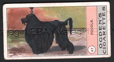 DOG Poodle Standard, Very Rare Trading Card, 1908