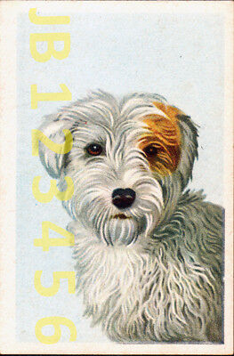 DOG Sealham Terrier Portrait, Small German Trading Card Tobacco Card 1933