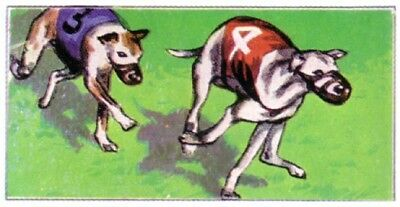 DOG Whippet Coursing Racing Dog Race, Small 1970 Trading Card 40+ Years Old