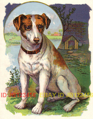 DOG Jack Russell Terrier, Nice Antique Chromolith Print