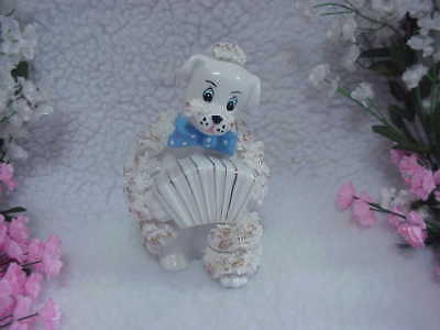 White Spaghetti Poodle Musician Playing Concertina - Blue Polka Dot Bow Tie