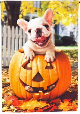 New Evergreen Garden Flag Halloween French Bulldog Pup In Jack-0-Lantern 12.5X18