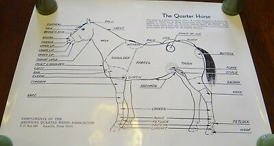 American Quarter Horse Association AQHA Registered Points Parts of Horse POSTER
