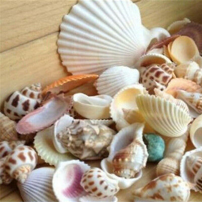 100g Beach Mixed SeaShells Mix Sea Shells Shell  Craft SeaShells Aquarium N0