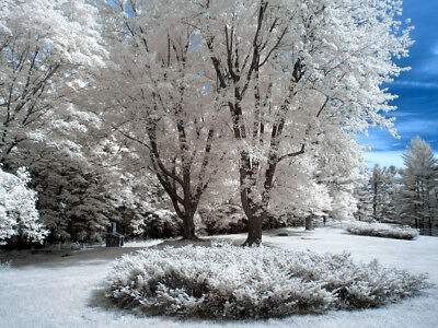 Photo, wallpaper digital picture free shipping worldwide, infrared eden