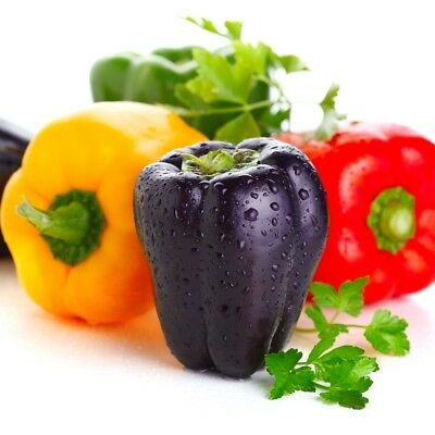 Sweet Pepper mixed  - Capsicum annuum - 65 seeds