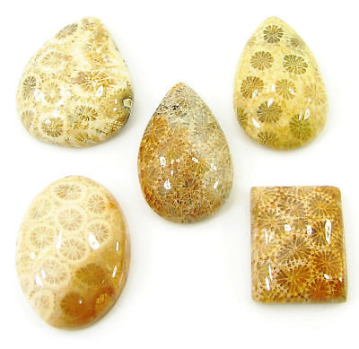 72.45 Ct Natural Fossil Coral Loose Cabochon Gemstone Lot of 5 Pcs Stone - 20710
