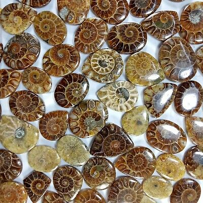 100 CT Ammonite Fossil 100%  Natural Best Quality Wholesale Lot Nice Gem