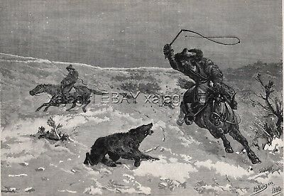 Wolf Hunt in Kyrgyzstan, Kyrgyz Using Whips, Large 1880s Antique Print & Article