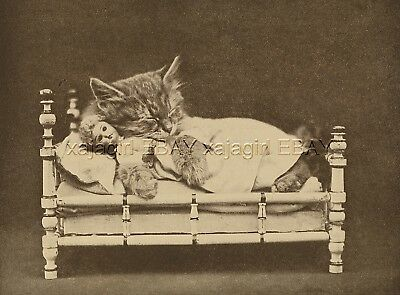 Cat Dressed Kitten Sleeps Catnaps with Her Doll in Bed, Cute 1915 Print