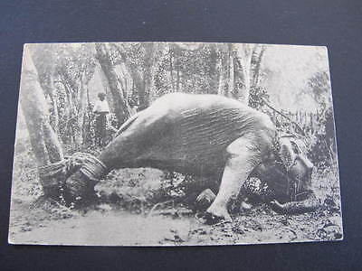 Struggling Elephant Colombo Old Postcard