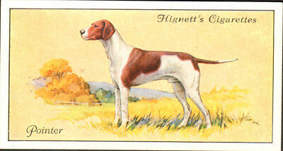 DOG English Pointer, Small British Trading Card 1936