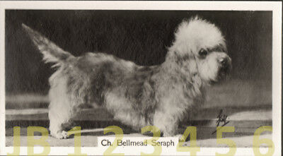DOG Dandy Dinmont (Named) Small Photo Trading Card 1938