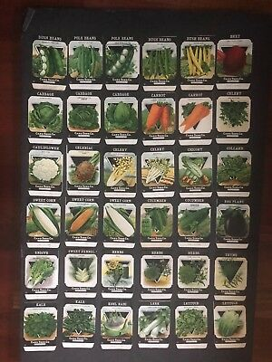 1930s Litho Antique Vintage Seed Packets 69 varieties Card Seed Co Packs Mint