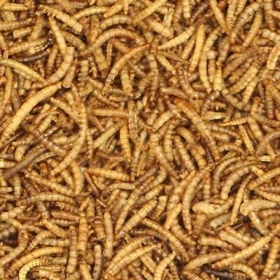 10kg Top Quality Dried Mealworms Wild Birds Bird Hedgehog Chicken Poultry
