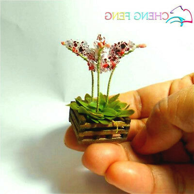 Mini Orchid Bonsai Seeds Miniature Home Indoor Flower Plants Pot Seed 100pcs