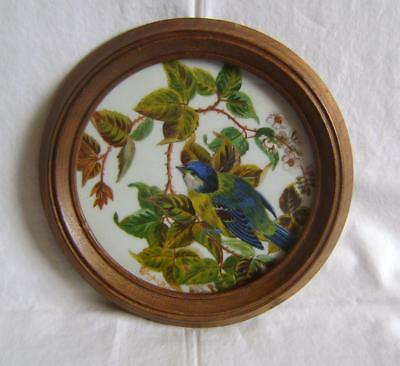 Vintage Painted White Glass Roundel in Frame: Green Tit on Brambles: Signed