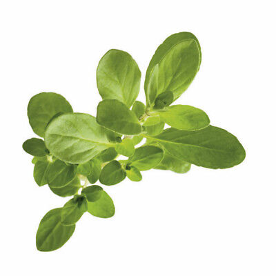Sweet Marjoram Essential Oil 100% Pure Natural Aromatherapy Therapeutic Oils