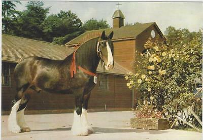 Horse Postcard- Courage Shire Horse