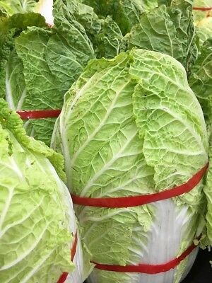 "Napa cabbage ""Optiko"", Chinese cabbage - early, delicious - - 65 seeds"