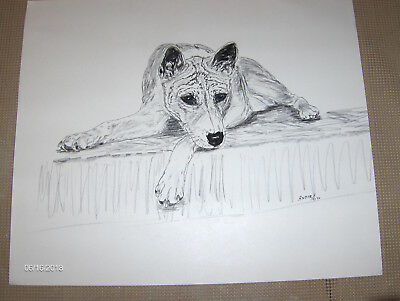 Basenji - Original Drawing by Andie 1990/Signed, one of a kind drawing.