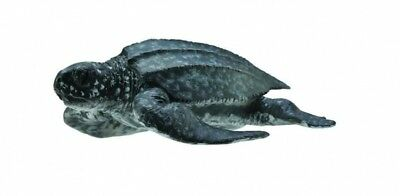 LEATHERBACK SEA TURTLE SEALIFE TOY MODEL by COLLECTA 88680 *NEW WITH TAG*
