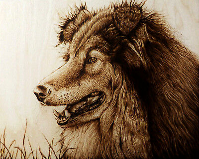 """""""picture Perfect Smile"""" Original Dog/collie Pyrography/woodburning Drawing"""
