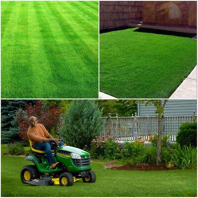 10000pc Tall Fescue Green Grass Seed Festuca Arundinacea Lawn Field Turf Seeds