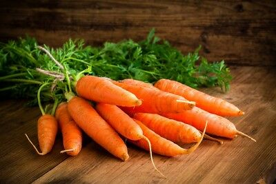 """Carrot """"Sukces"""" - late, storable variety - 4250 seeds"""