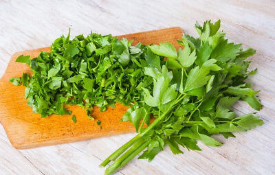 Home Garden - lovage - for indoor and balcony cultivation  - seeds