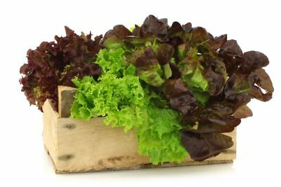 Lettuce - variety mix - COATED SEEDS - 250 seeds